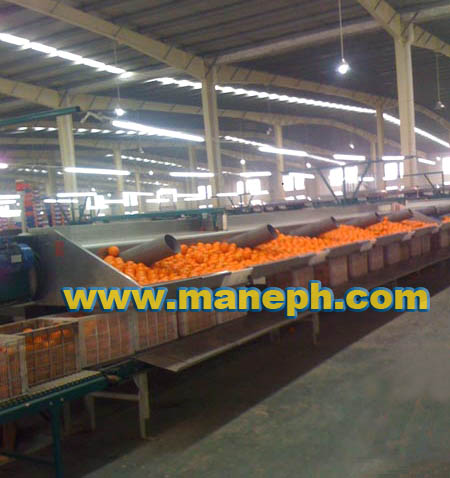 ORANGE SORTING CONVEYOR